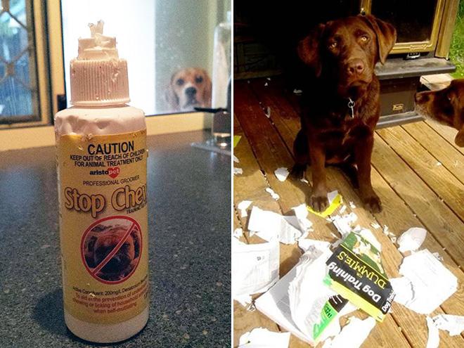 cachorros-totalmente-inocentes-11