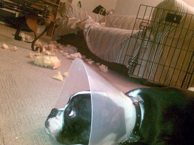 cachorros-totalmente-inocentes-12