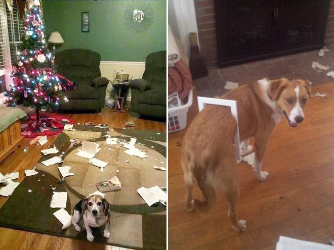 cachorros-totalmente-inocentes-13