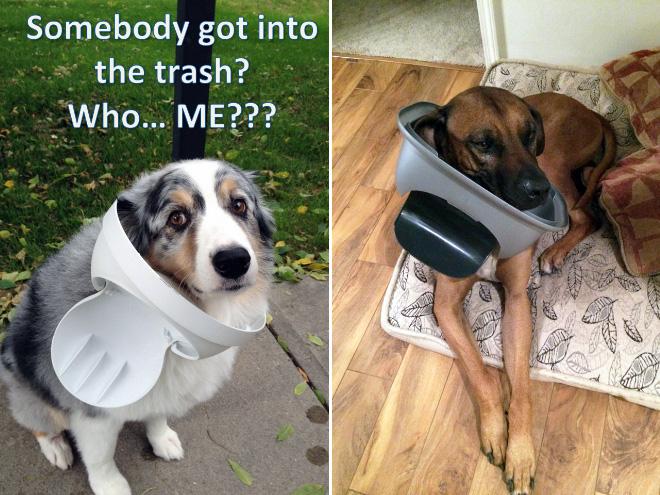 cachorros-totalmente-inocentes-15