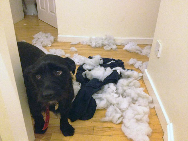 cachorros-totalmente-inocentes-2