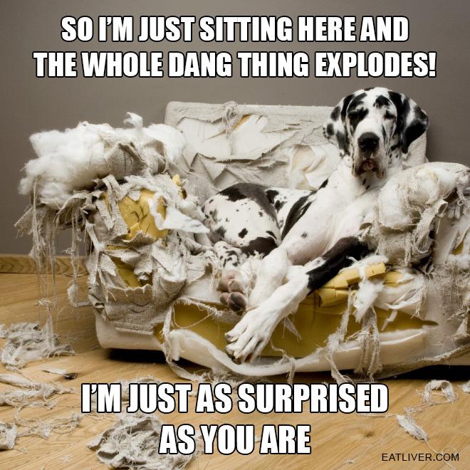 cachorros-totalmente-inocentes-4