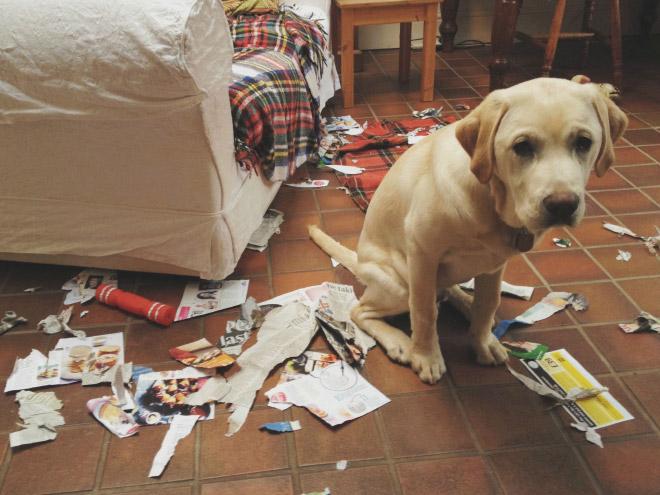cachorros-totalmente-inocentes-6