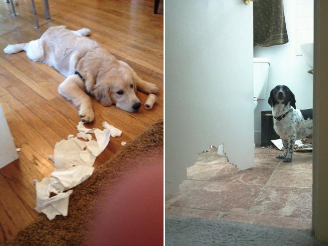 cachorros-totalmente-inocentes-7