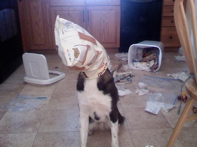cachorros-totalmente-inocentes-8