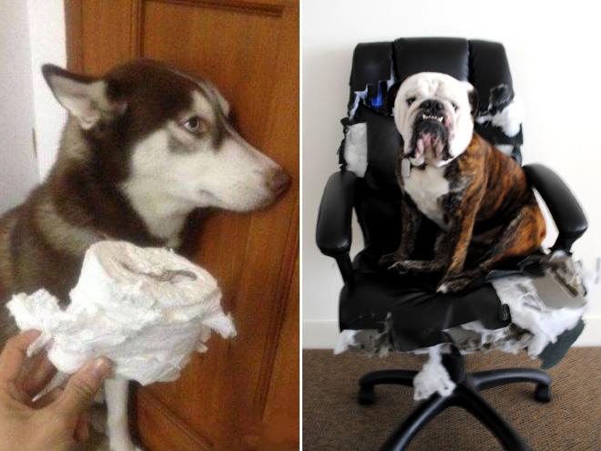 cachorros-totalmente-inocentes-9