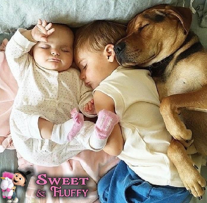 Sweet Fluffy: Sweet & Fluffy