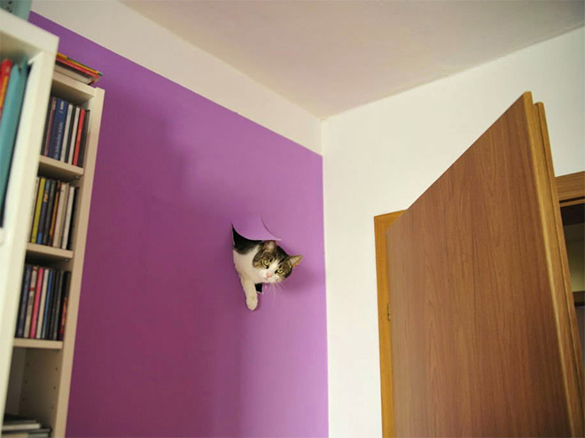 gatos-bagunca-14