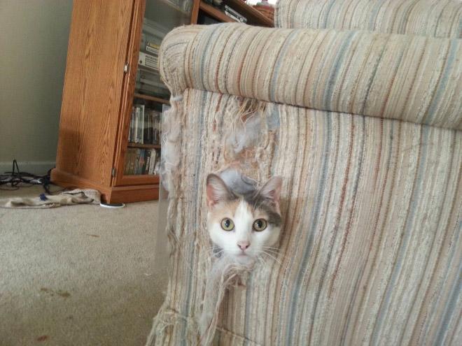 gatos-bagunca-4