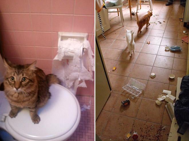 gatos-bagunca-7
