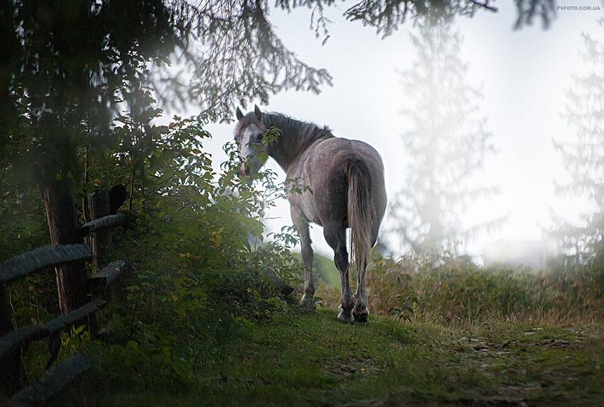 sergey-polyushko-animais-33