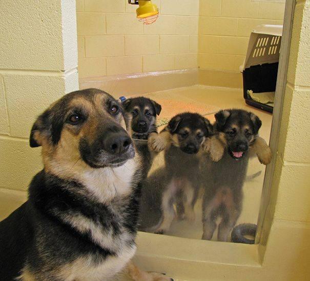 cachorros-filhotes-1