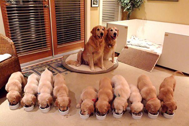 cachorros-filhotes-13