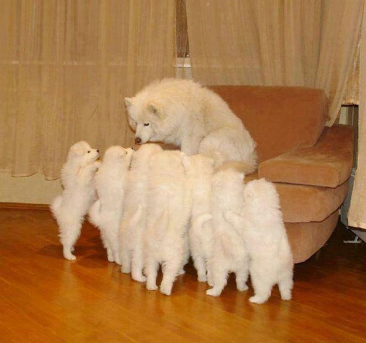cachorros-filhotes-14