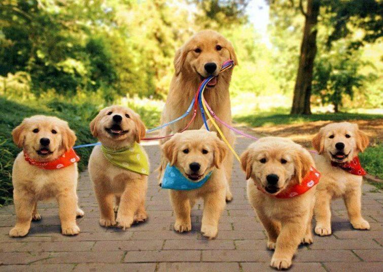 cachorros-filhotes-17