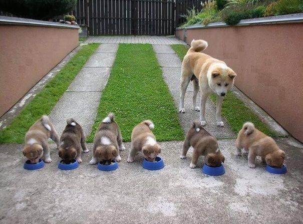 cachorros-filhotes-2