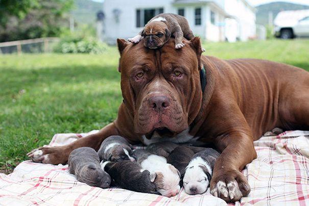 cachorros-filhotes-20