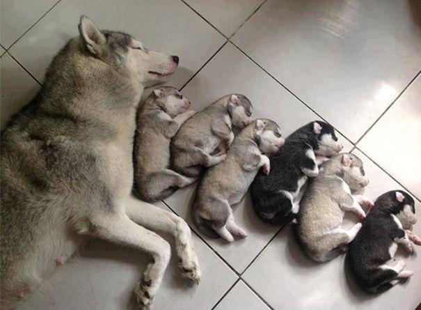 cachorros-filhotes-6