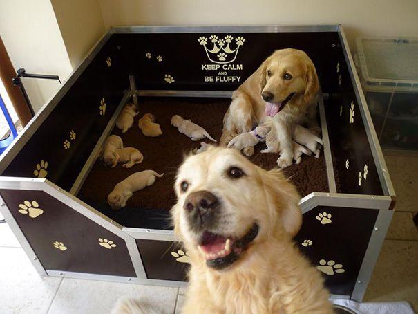 cachorros-filhotes-9