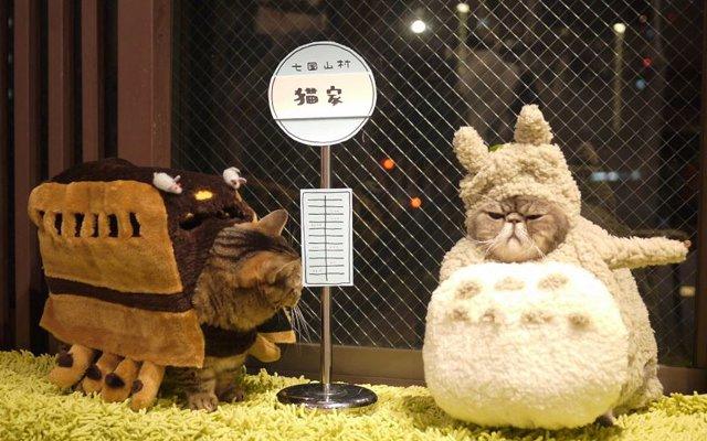 cat-cafes-2
