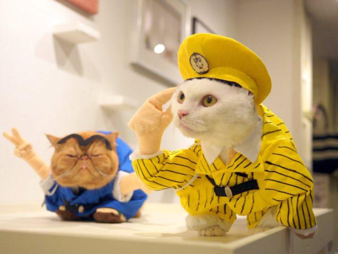 cat-cafes-6