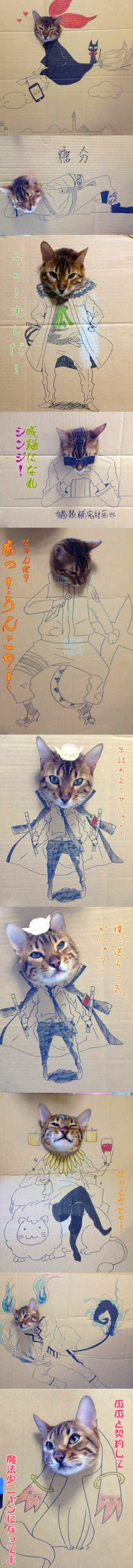 aventuras-do-gato