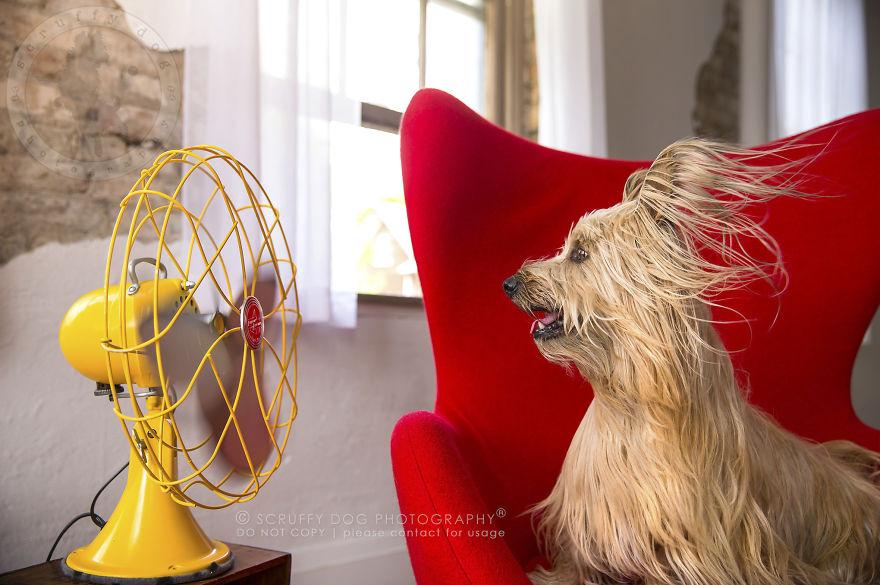 caes-e-ventiladores (4)