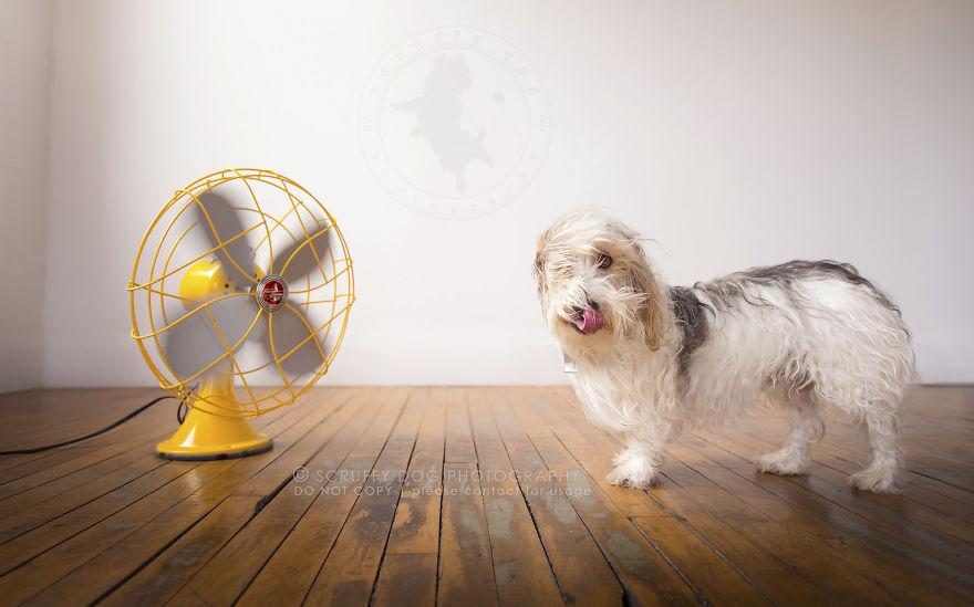 caes-e-ventiladores (9)