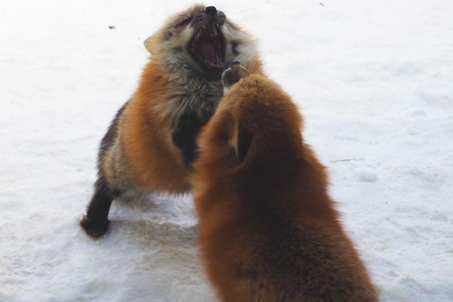 fox-village (1)