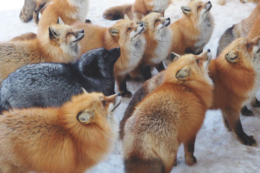 fox-village (10)