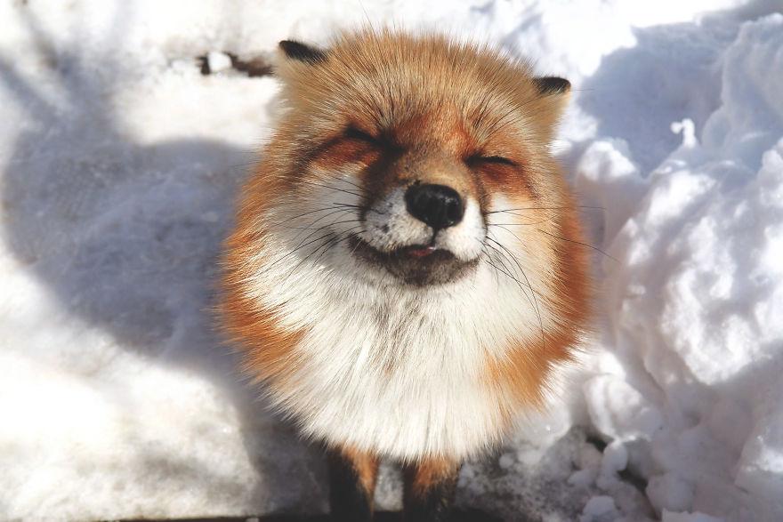 fox-village (11)