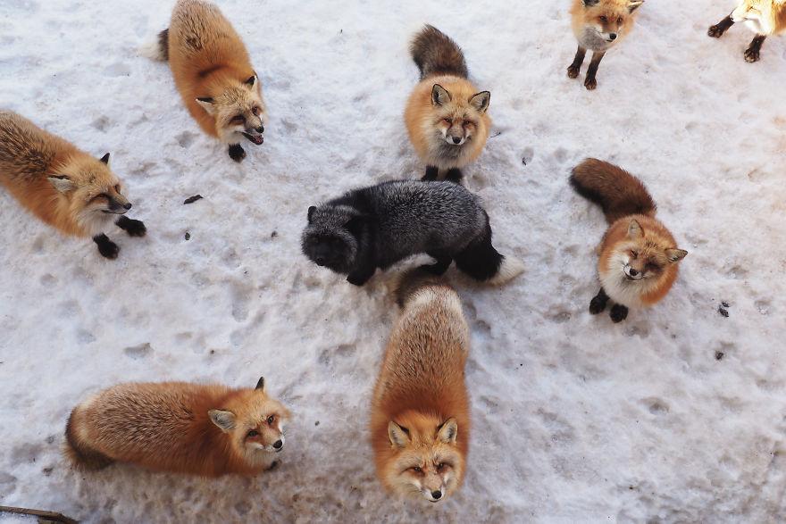 fox-village (12)