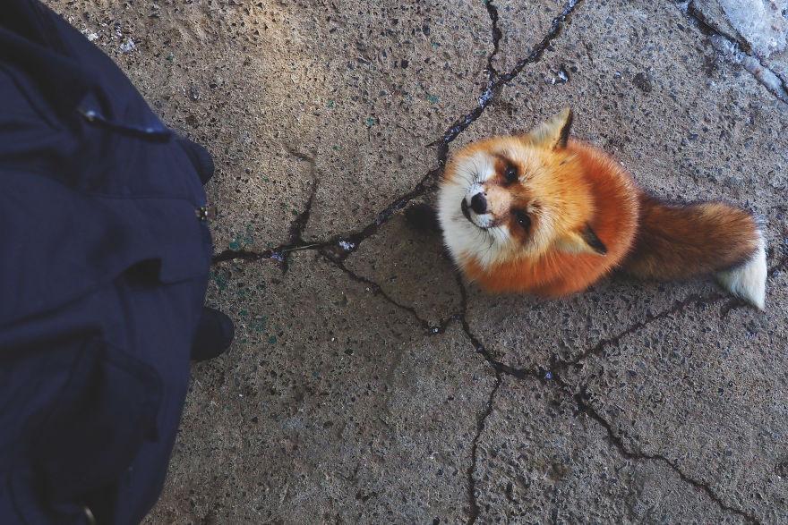 fox-village (13)