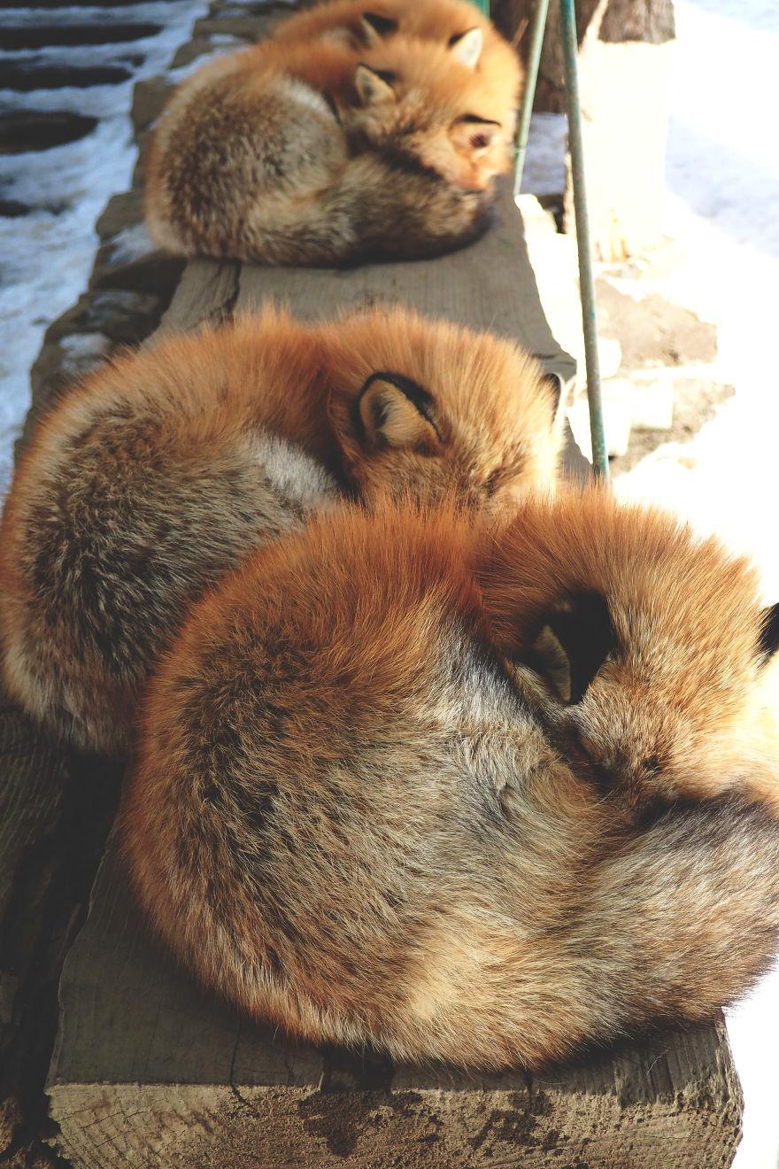 fox-village (14)