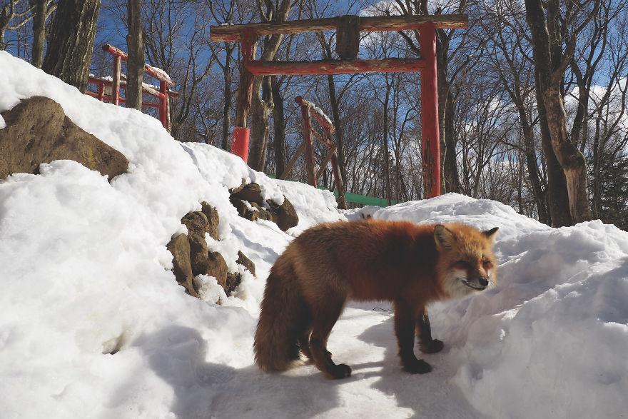 fox-village (15)