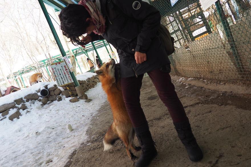 fox-village (2)