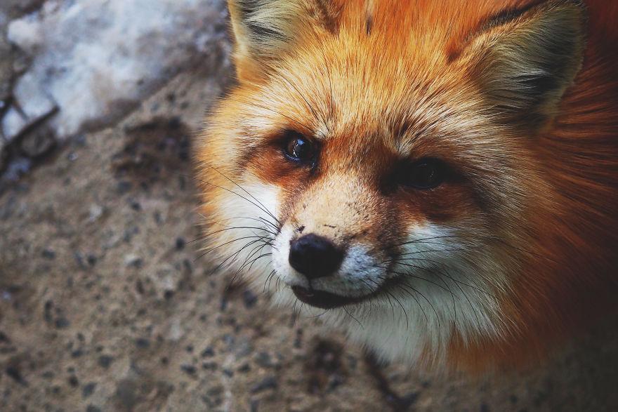 fox-village (3)