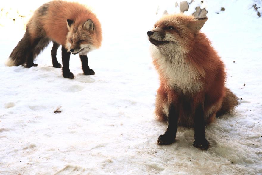 fox-village (4)