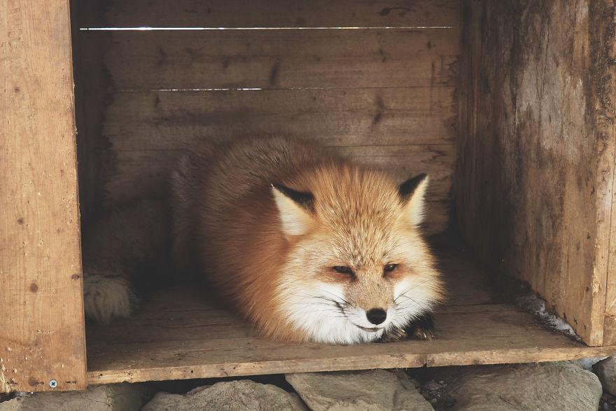 fox-village (5)