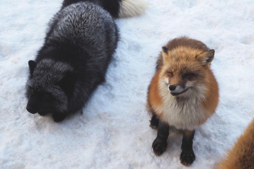 fox-village (6)