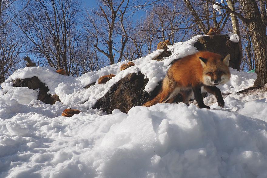 fox-village (7)