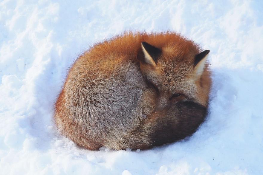 fox-village (8)