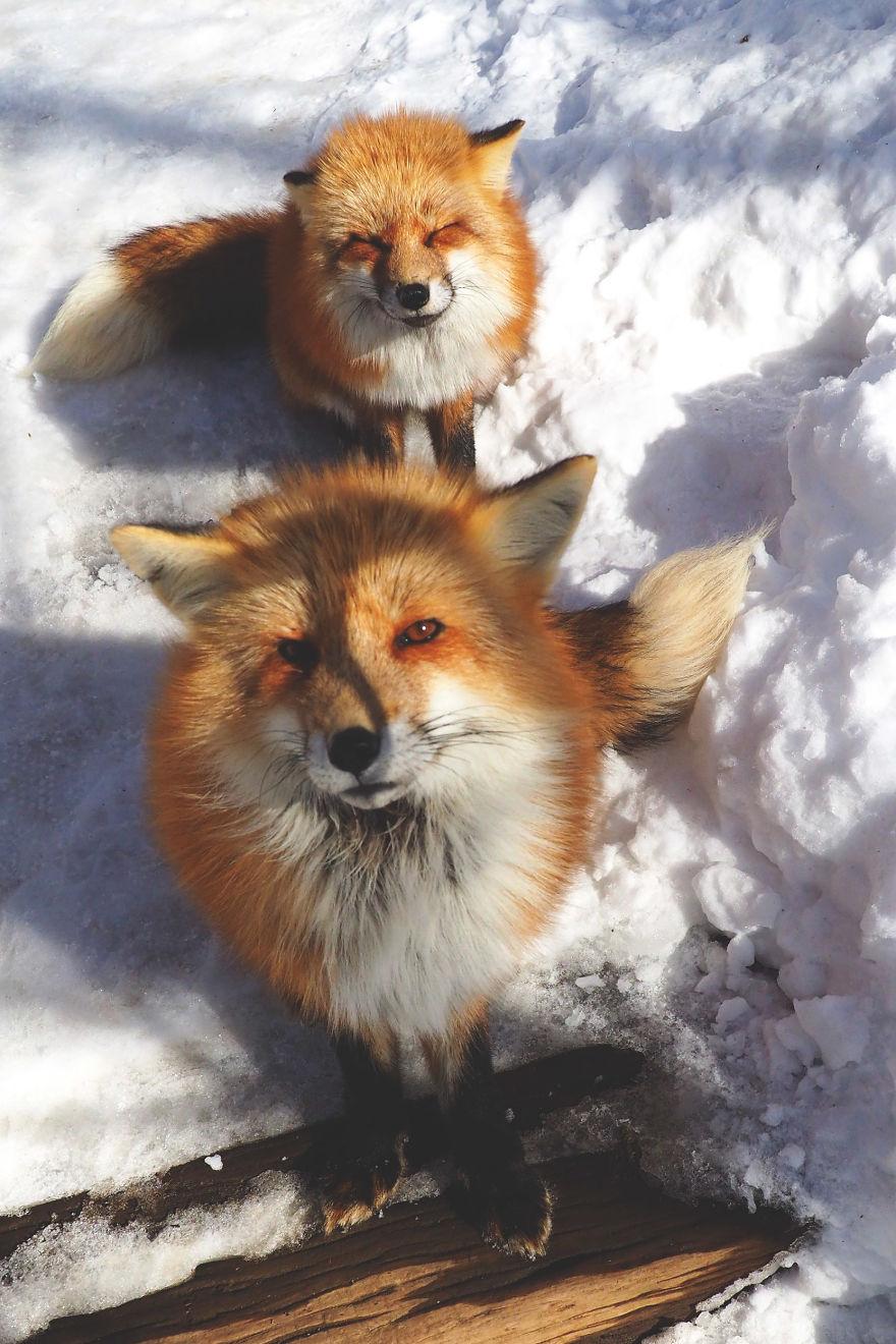 fox-village (9)