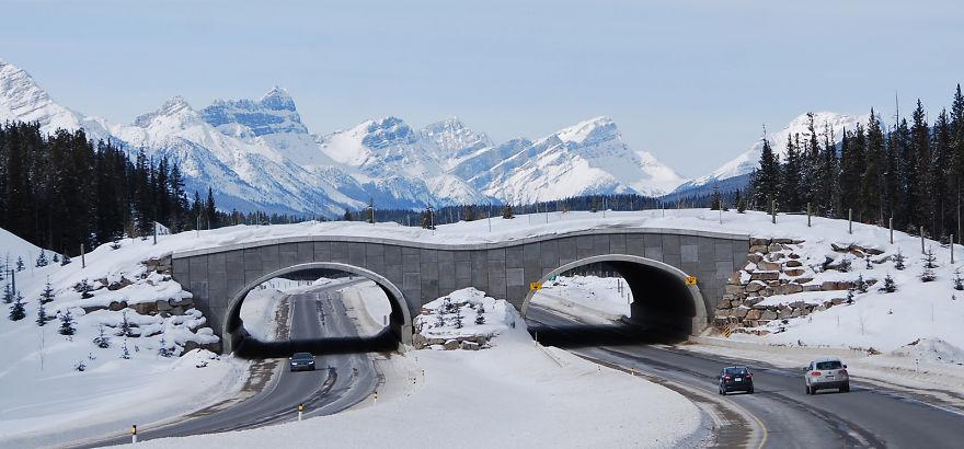Passagem para ursos no Parque Nacional Banff no Canadá