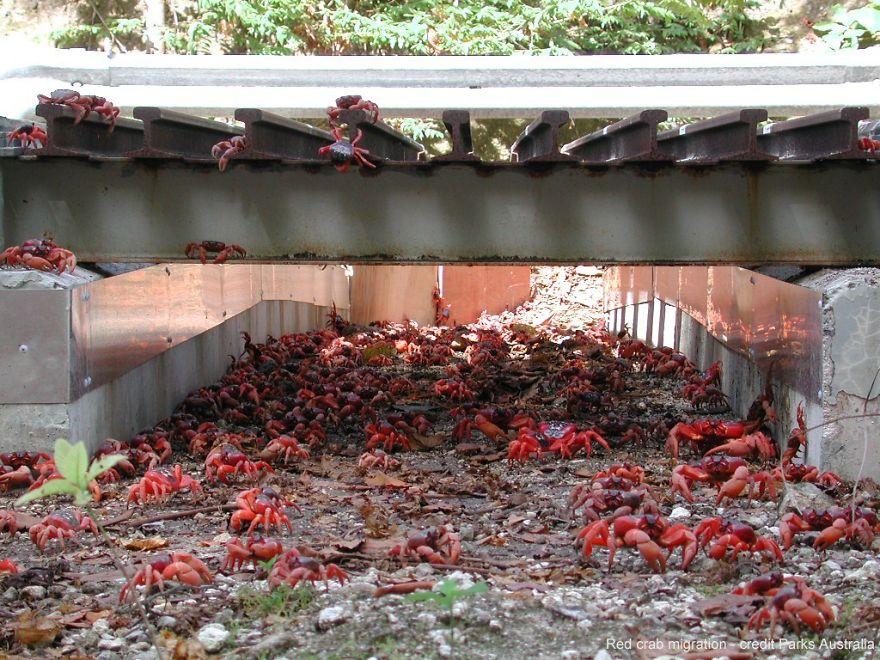 Túnel para o Caranguejo Vermelho em Christmas Island na Austrália