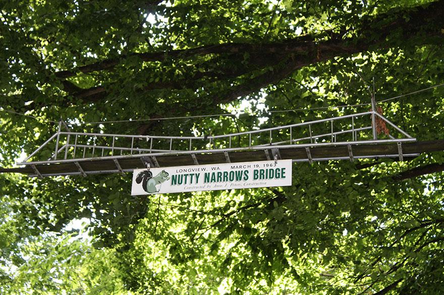 Ponte para esquilos em Washington