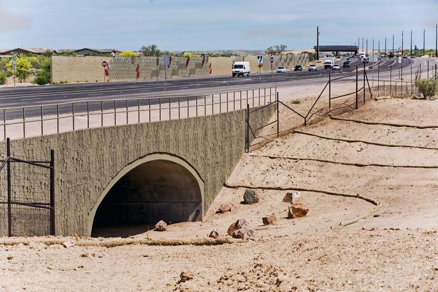 Passagem de animais em Catalina no Arizona
