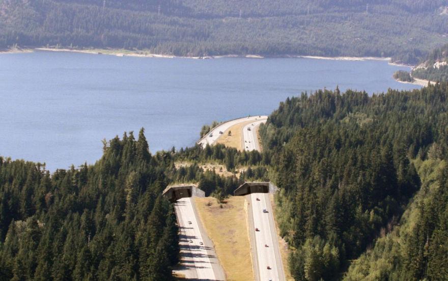 Passagem para animais selvagens em Keechelus Lake