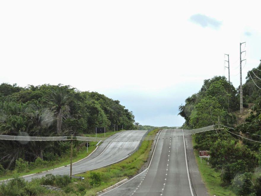 Ponte para macacos na Bahia, Brasil