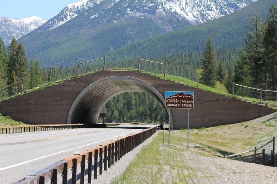 Ponte para animais em Montana